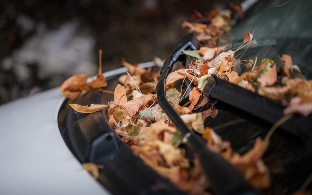 落ち葉の堆積